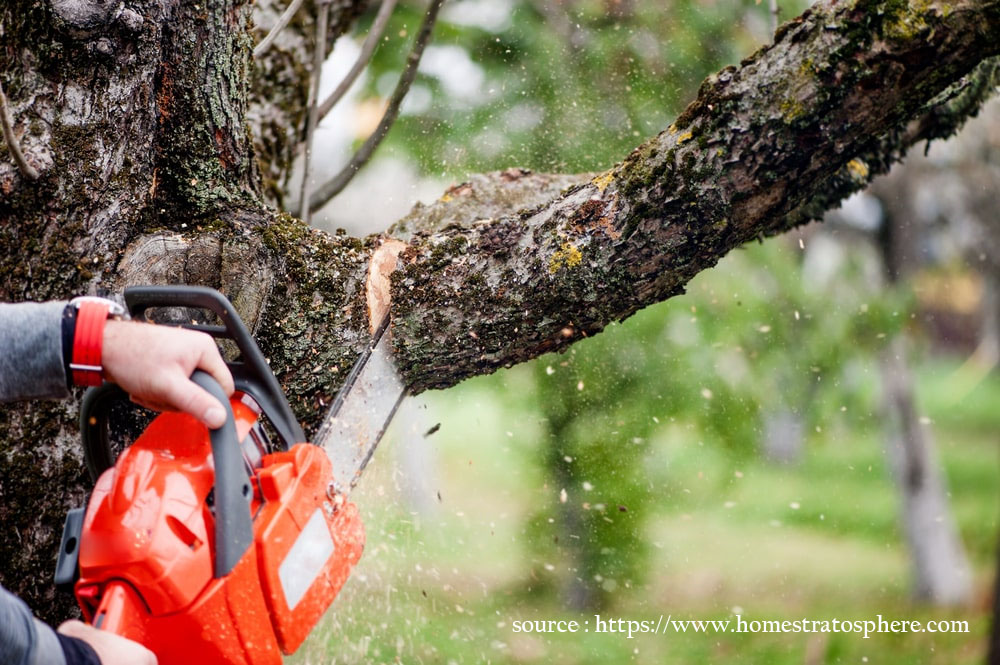 DIY – How to Trim Tree Branches Yourself