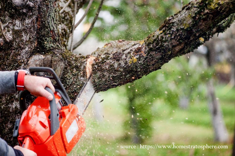 Trim Tree Branches