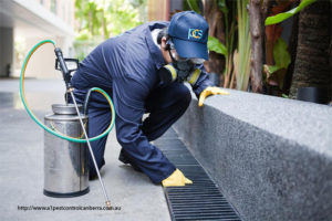 What To Know About Pest Control